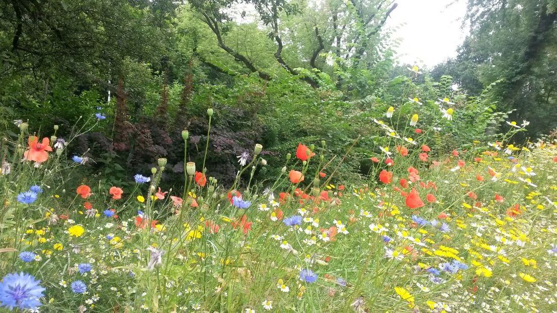 why we should rewild our gardens